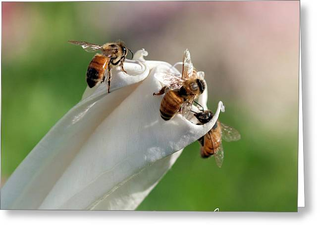 Bees On Angel Trumpet Greeting Card