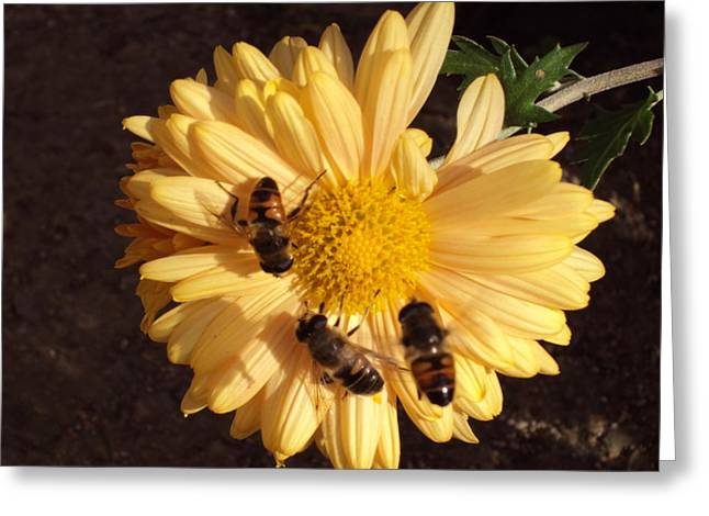 Bees On Feast Greeting Card by David Du Hempsey