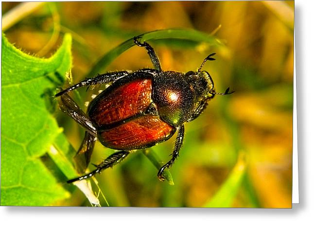 Beetle Take-off Greeting Card by Pradeep Bangalore