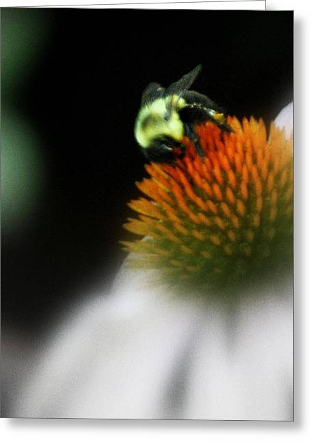 Greeting Card featuring the photograph Beeutiful  by Laura DAddona