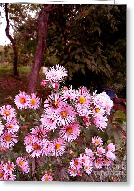 Beeze In The Breeze Greeting Card by The Stone Age