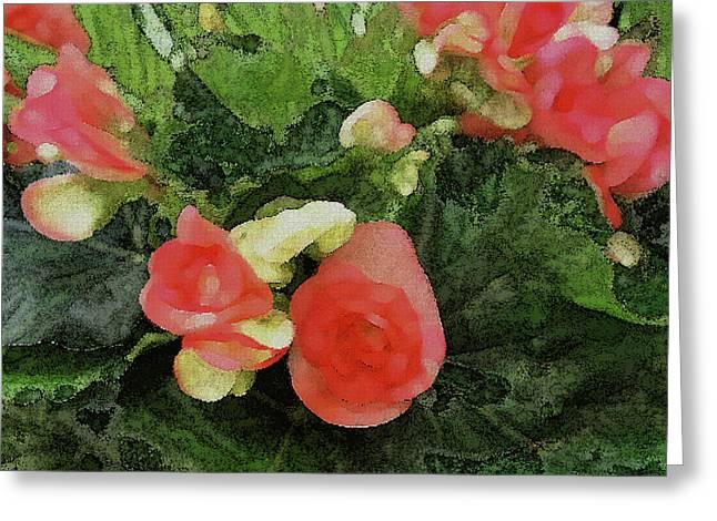 Begonia 5 Greeting Card