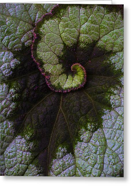 Begonia Leaf Close Up Greeting Card by Garry Gay