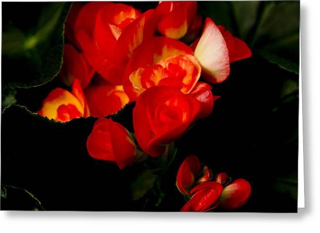 Begonias Greeting Card by John Ater