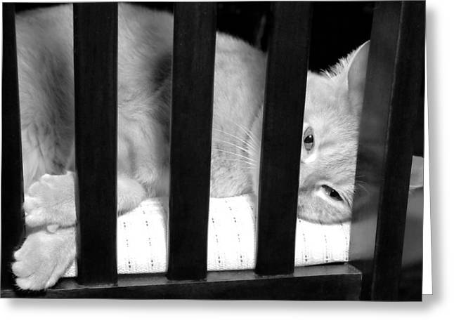 Behind Bars Greeting Card by Diana Angstadt
