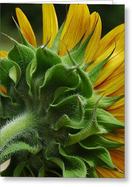 Behind The Sun-flower Greeting Card by Lori Mellen-Pagliaro