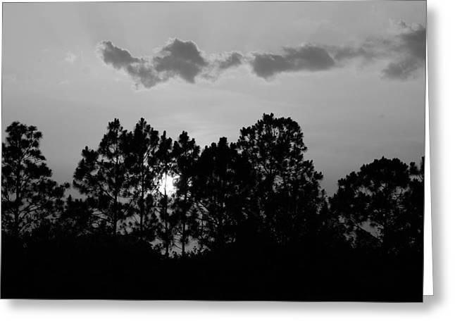 Behind The Trees Greeting Card by Florene Welebny