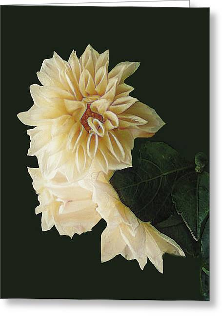 Beige Bold And Beautiful Greeting Card by RC DeWinter