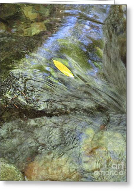 Greeting Card featuring the photograph Being Still by Marie Neder