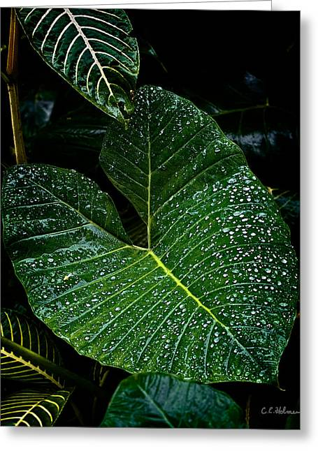 Bejeweled Leaf Greeting Card by Christopher Holmes