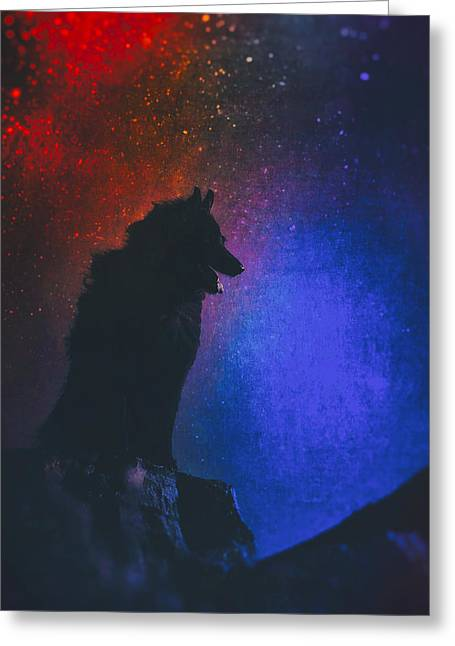 Belgian Sheepdog Art 2 Greeting Card by Wolf Shadow  Photography