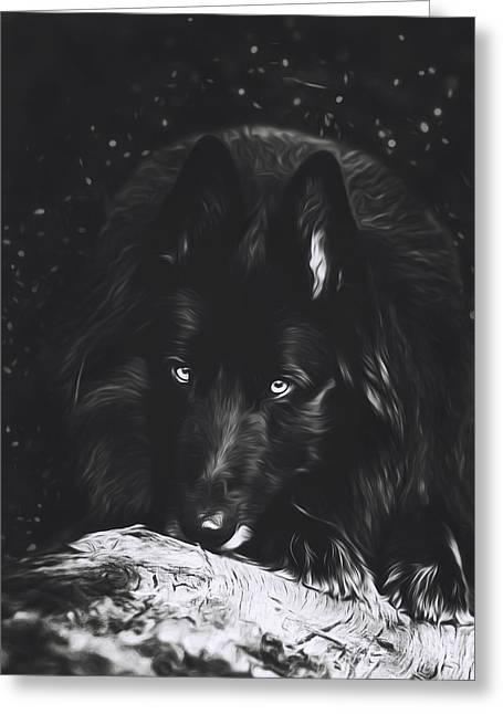 Belgian Sheepdog Art 5 Greeting Card by Wolf Shadow  Photography