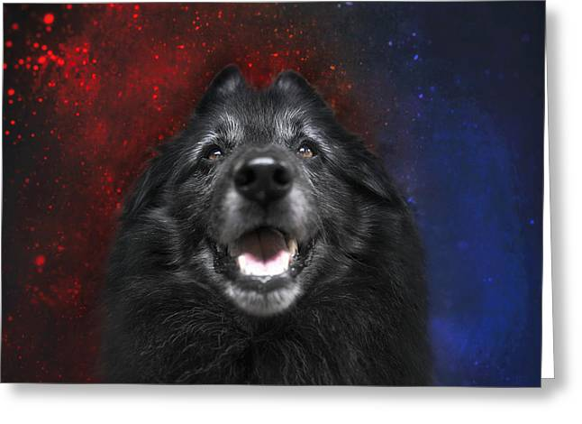 Belgian Sheepdog Artwork 16 Greeting Card by Wolf Shadow Photography