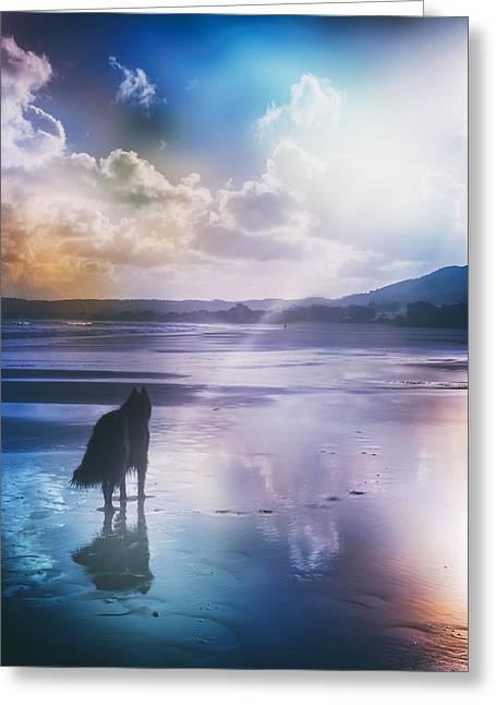 Belgian Sheepdog Artwork Greeting Card