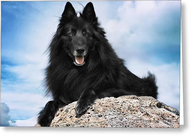 Belgian Sheepdog Portrait 10 Greeting Card by Wolf Shadow  Photography