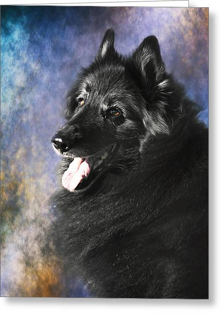 Belgian Sheepdog Portrait 12 Greeting Card by Wolf Shadow  Photography
