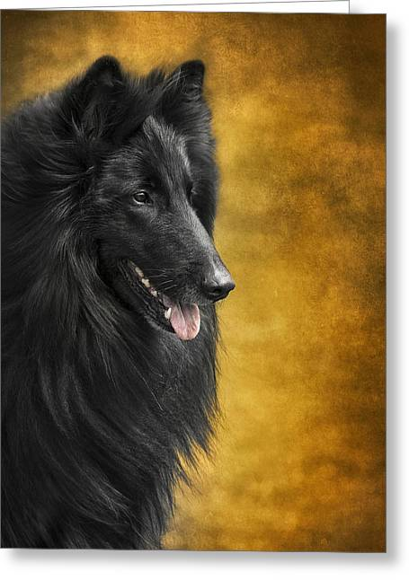 Belgian Sheepdog Portrait Greeting Card by Wolf Shadow  Photography
