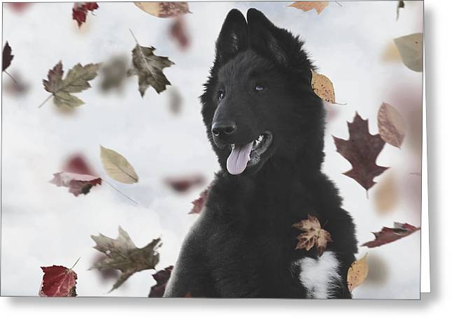 Belgian Shepherd Puppy In Autumn Greeting Card by Wolf Shadow  Photography
