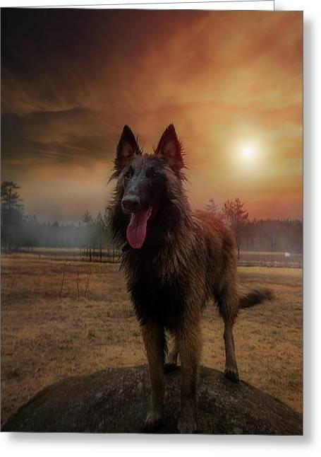 Belgian Shepherd Greeting Card