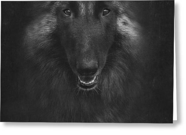 Belgian Tervuren Artwork 2 Greeting Card by Wolf Shadow  Photography