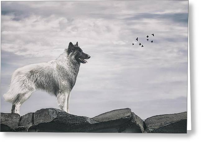 Belgian Tervuren Artwork 3 Greeting Card by Wolf Shadow  Photography