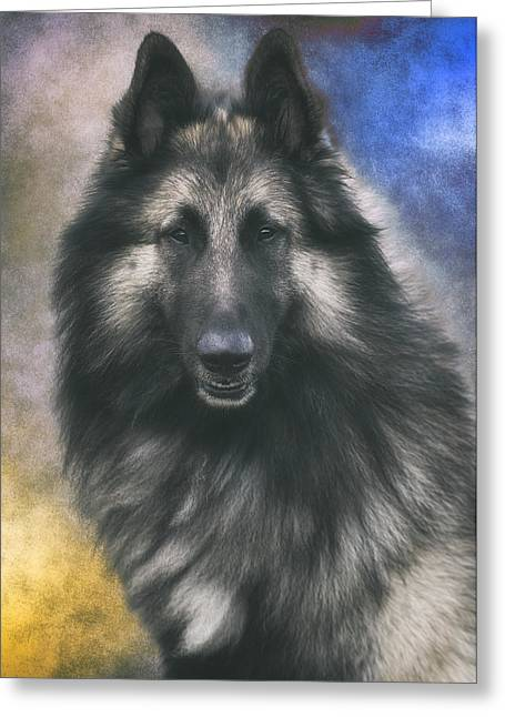 Belgian Tervuren Portrait 1 Greeting Card by Wolf Shadow  Photography