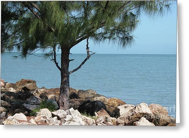 Belize Ocean Front Greeting Card by Wilko Van de Kamp