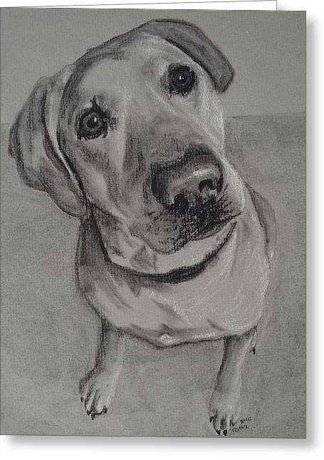 Bella Bean Labrador Retriever Greeting Card by Ruthie Sutter
