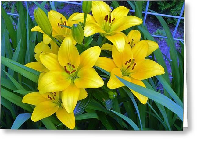 Bellingham Blooms Greeting Card