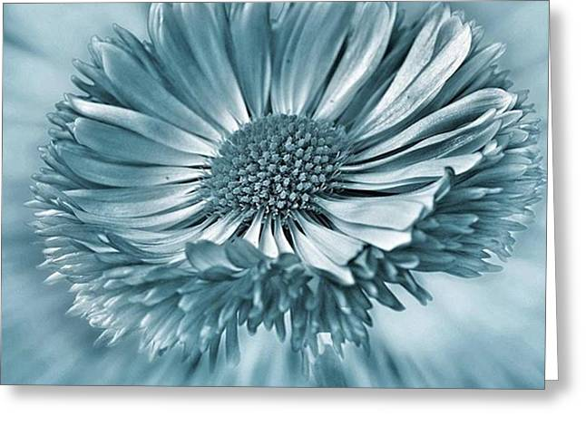 Bellis In Cyan  #flower #flowers Greeting Card by John Edwards