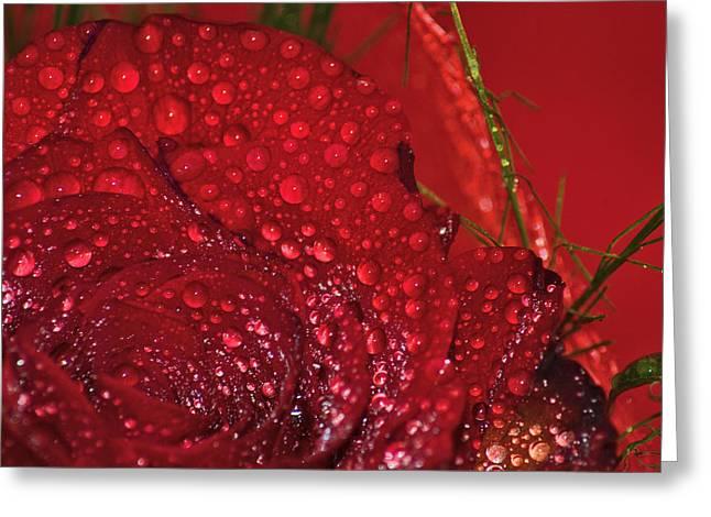 Bellissima Rosa Rossa Con Rugiada Greeting Card by Orazio Puccio