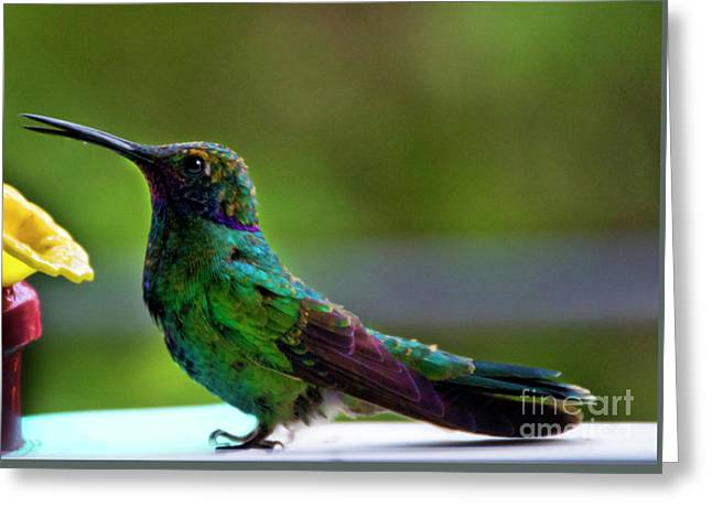 Belly Up To The Bar Greeting Card by Al Bourassa