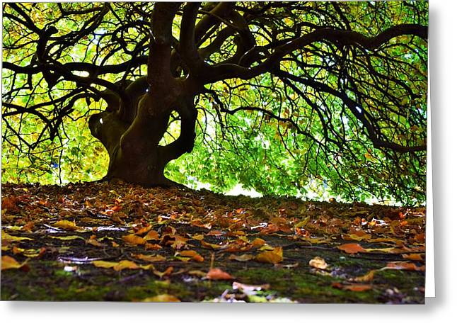 Below The Autumn Canopy Greeting Card