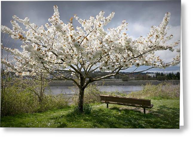 Bench And Blossoms Greeting Card