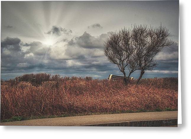 Bench And Tree Greeting Card