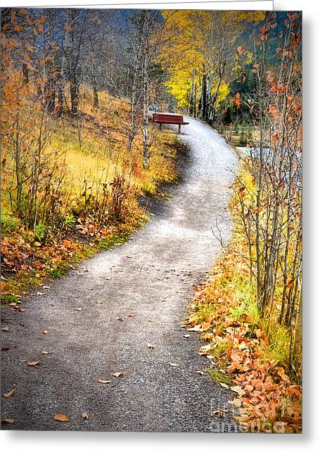 Bench On A Hill Greeting Card by Tara Turner