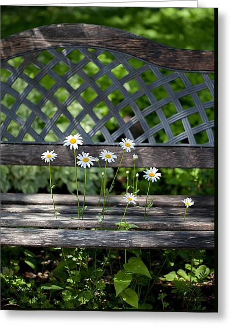 Benched Greeting Card by Aaron Aldrich