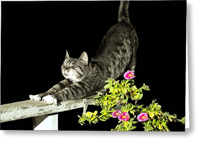 Bend And Stretch Greeting Card by Diana Angstadt