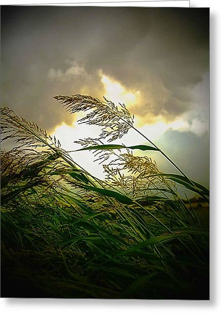 Bend In The Storm Greeting Card by Ken Gimmi