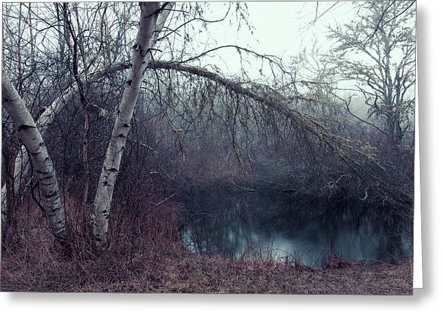 Greeting Card featuring the photograph Bending Birch by Andrew Pacheco
