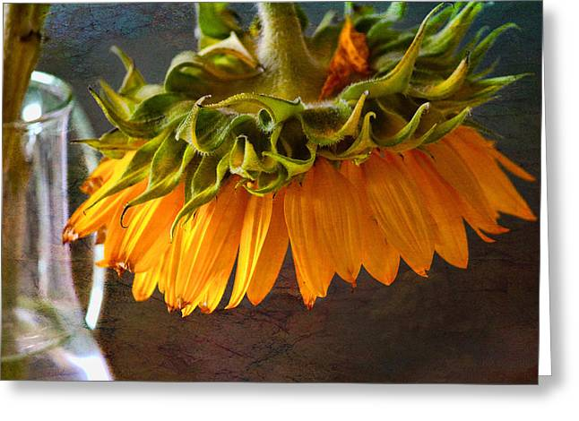 Greeting Card featuring the photograph Bending  Sunflower by John Rivera