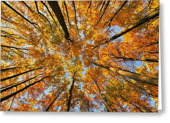 Dk Greeting Cards - Beneath the canopy Greeting Card by Edward Kreis