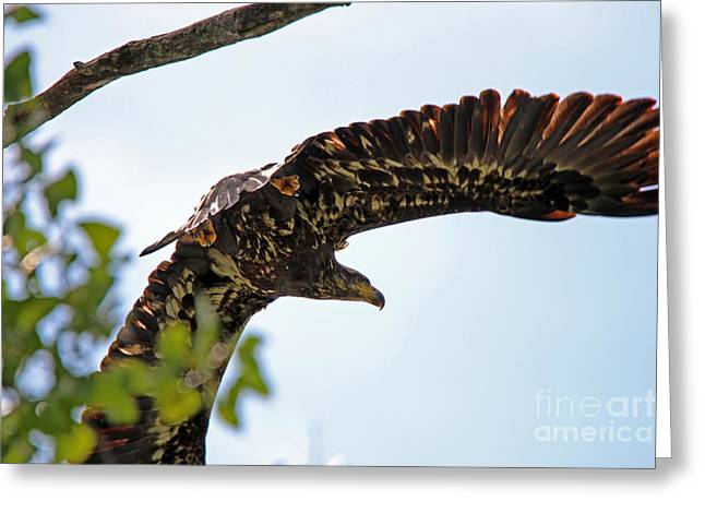Beneath The Wings Of An Eagle  9038 Greeting Card