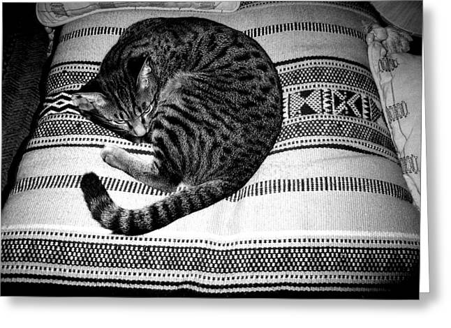 Bengal Catnap Greeting Card by Fareeha Khawaja