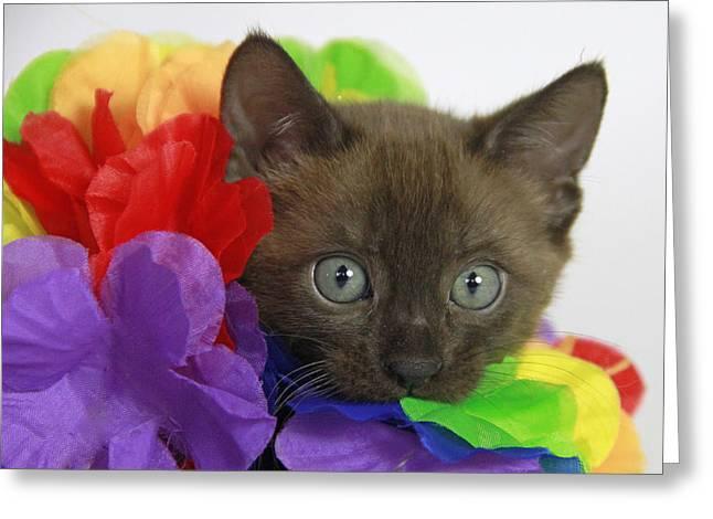 Bengal Colors Greeting Card