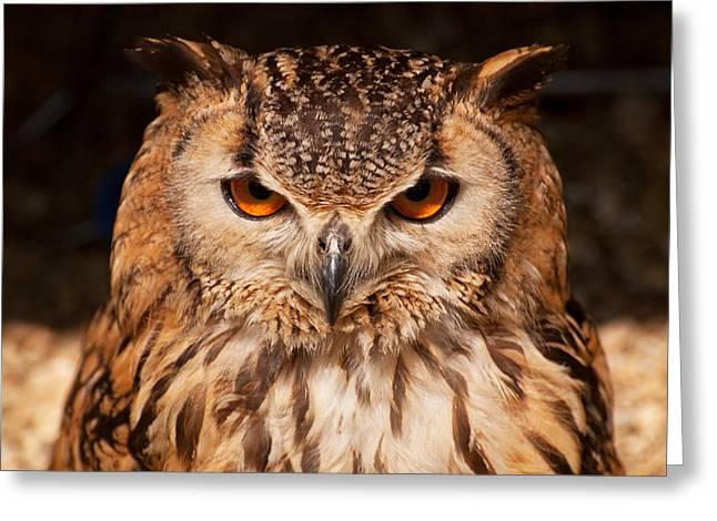 Bengal Owl Greeting Card