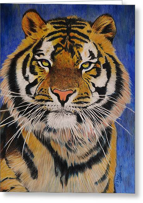Bengal Tiger Greeting Card by Don MacCarthy