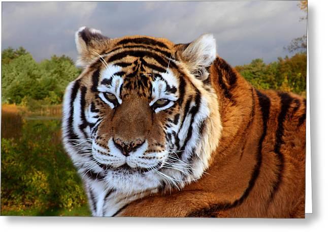 Bengal Tiger Portrait Greeting Card