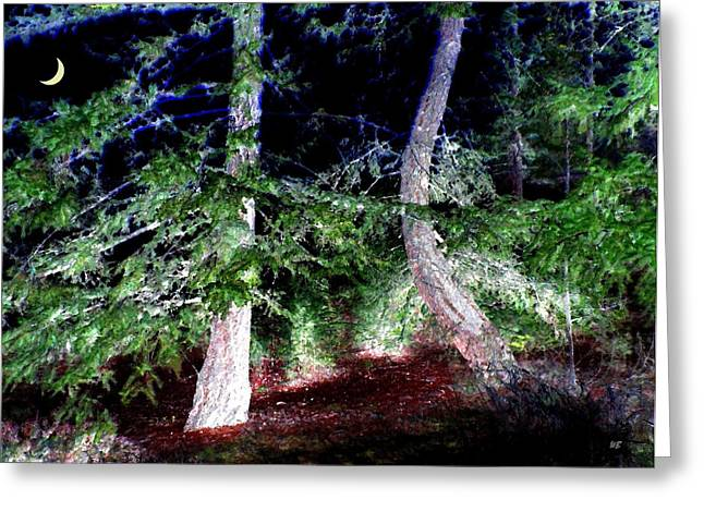 Bent Fir Tree Greeting Card by Will Borden
