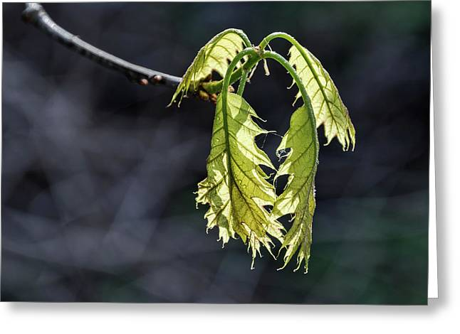 Bent On Growing - Greeting Card